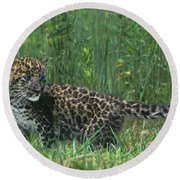 African Leopard Cub In Tall Grass Endangered Species Round Beach Towel