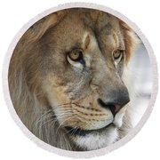 African Lion #8 Round Beach Towel