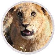 African Lion Cub Resting Round Beach Towel
