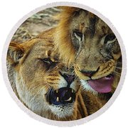African Lions 7 Round Beach Towel
