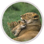 African Lions Mother And Cubs Tanzania Round Beach Towel