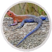African Safari Lizard Round Beach Towel