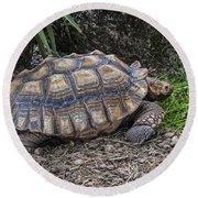 African Spurred Tortoise Round Beach Towel