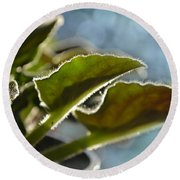African Violet Leaves With Bokeh   Round Beach Towel