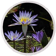 African Waterlily Dazzle -- Plus Dragonfly Round Beach Towel