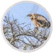 African White-backed Vulture Round Beach Towel