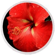 Georgia Red Hibiscus After A Rain Greensboro Georgia Art Round Beach Towel