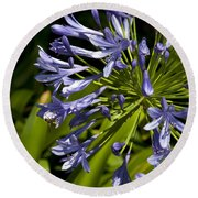Agapanthus Flower And Bee Round Beach Towel