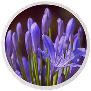 Agapanthus - Lily Of The Nile - African Lily Round Beach Towel