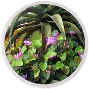 Agave And African Violets Round Beach Towel