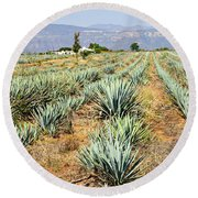 Agave Cactus Field In Mexico Round Beach Towel