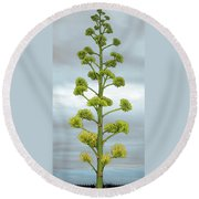 Agave Flower Spike Round Beach Towel
