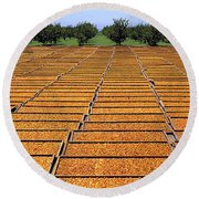Agriculture - Blenheim Apricots Round Beach Towel