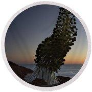 Ahinahina - Silversword - Argyroxiphium Sandwicense - Summit Haleakala Maui Hawaii Round Beach Towel