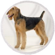 Airedale Terrier Dog Round Beach Towel