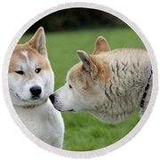 Akita Inu Dogs, Old And Young Round Beach Towel