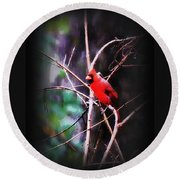 Alabama Rain - Cardinal Round Beach Towel