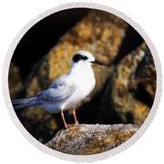 Alabama Tern Round Beach Towel