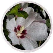 Alabama Wildflower -  Woolly Rose Mallow Round Beach Towel
