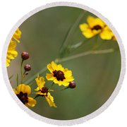 Alabama Wildflowers Coreopsis Tinctoria Tickseed Round Beach Towel