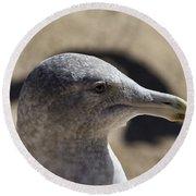 Albatross- Hawaii Round Beach Towel