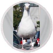 Albatross Round Beach Towel