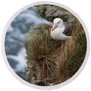 Albatross Rookery Round Beach Towel