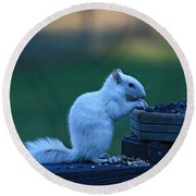 Albino Squirrel Round Beach Towel