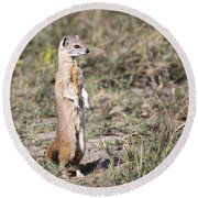 Alert Yellow Mongoose Round Beach Towel