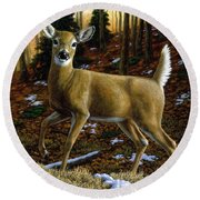 Whitetail Deer - Alerted Round Beach Towel by Crista Forest