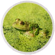 Algae Covered Frog Round Beach Towel