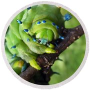 Alien Nature Cecropia Caterpillar Round Beach Towel