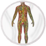 All Body Systems In Male Anatomy Round Beach Towel