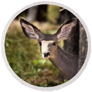 All Ears - Mule Deer Fawn - Casper Mountain - Casper Wyoming Round Beach Towel