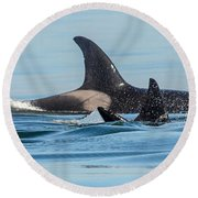 All In The Family Round Beach Towel