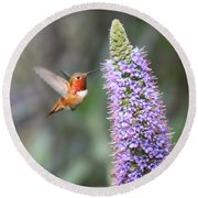 Allen Hummingbird On Flower Round Beach Towel