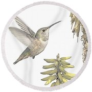 Allen's Hummingbird And Aloe Round Beach Towel