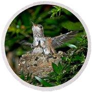 Allens Hummingbird Chicks Round Beach Towel