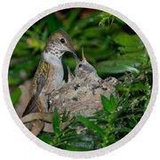 Allens Hummingbird Feeds Young Round Beach Towel
