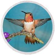 Allens Hummingbird Male Round Beach Towel