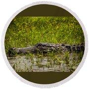 Alligator Amoungst Us Round Beach Towel