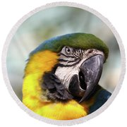 Alligator Farm Resident Round Beach Towel