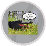 Alligator Greeting Card Round Beach Towel by Al Powell Photography USA