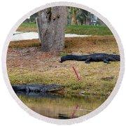 Alligator Hazard Round Beach Towel