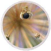 Allium Lucille Ball Seedpod Round Beach Towel