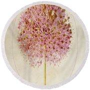 Allium Pink Jewel Round Beach Towel