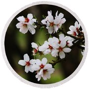 Almond Blossoms Round Beach Towel