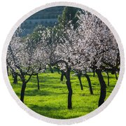 Almond Trees In Bloom Round Beach Towel