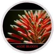 Aloe Bloom Window Round Beach Towel