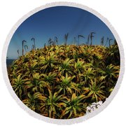 Aloe Is Anyone There Round Beach Towel